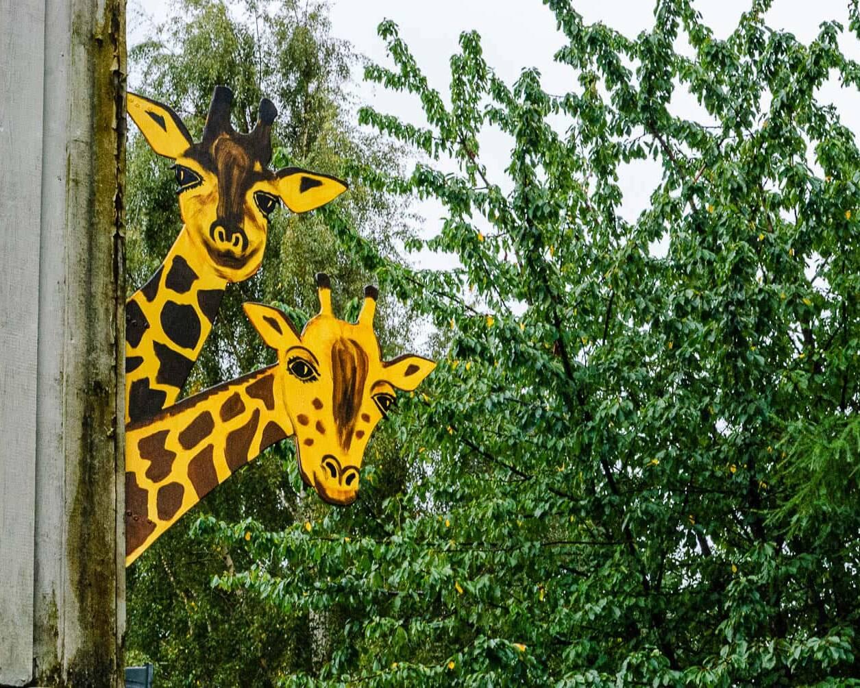 Konstepidemin - Giraffer