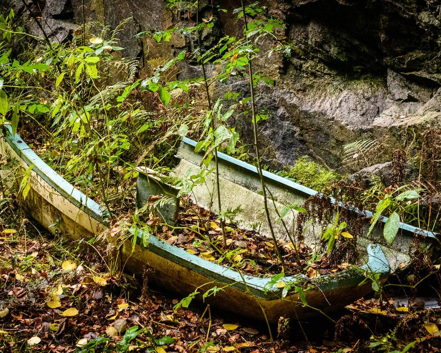 Rya Skog Naturreservat
